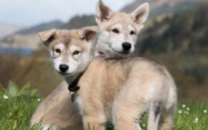 аллергическая реакция на собак
