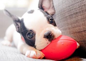 Что предпринять, если возникла аллергия на собаку у одного из членов семьи?