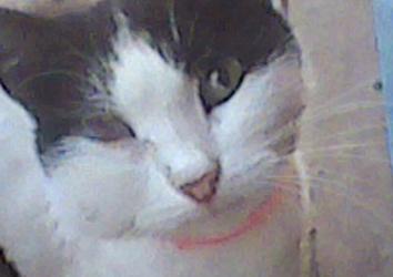 Что предпринять, если кота укусила оса?