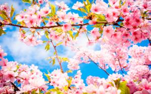 весенняя аллергия на цветение