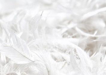 Как проявляется аллергия на перья и можно ли ее вылечить?